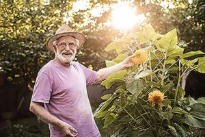 senior man looking at sunflowers during naples florida senior living activities
